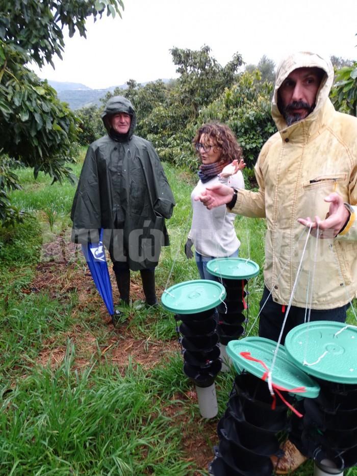 (από αριστερά) Ν. Παπαδαντωνάκης, Κ Βαρίκου και Α. Μιχαηλάκης κατά τη χθεσινή τοποθέτηση παγίδων για να προσελκυστούν έντομαι που μπορεί να μεταφέρουν τον μύκητα που προκαλεί το έκζεμα στα δέντρα αβοκάντο