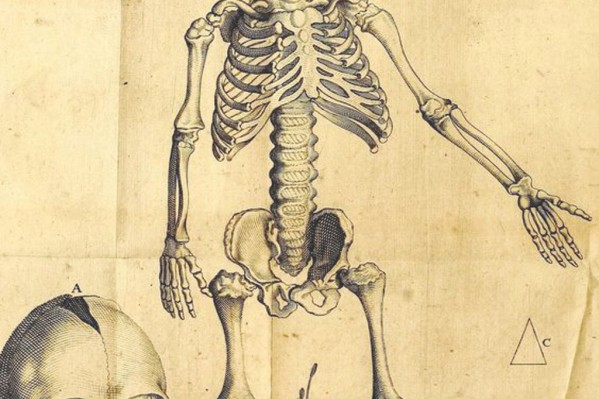 Απεικόνιση σκελετού και οστών μικρού παιδιού, από τον Ολλανδό ανατόμο Petrus Pavius (Πανεπιστήμιο Leiden, 1615).