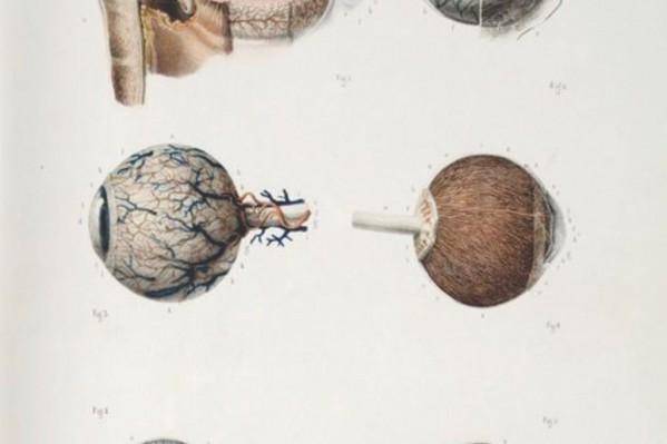 Ανατομικά σχέδια του ανθρώπινου ματιού, από το διάσημο Γάλλο γιατρό και ανατόμο Jean-Baptiste Marc Bourgery (1820).