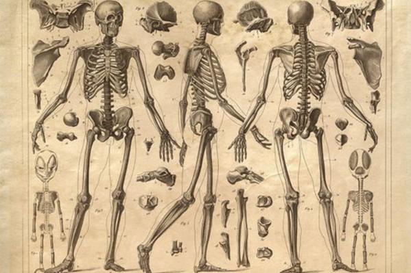 Λεπτομερείς απεικονίσεις των ανθρώπινων οστών, από τον Άγγλο καλλιτέχνη Henry Winkles (1860).
