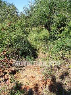 Συνεχείς είναι οι καταπατήσεις στην περιουσία του Ινστιτούτου και οι κλοπές από δέντρα που χρησιμοποιούνται για επιστημονικά πειράματα.