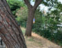 Δημοτικός Κήπος - αόρατη η πινακίδα από την πίσω είσοδο